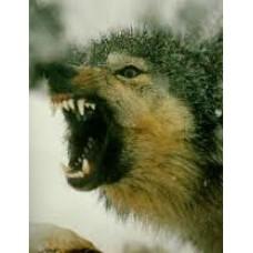 GATOR BAIT coyote bait