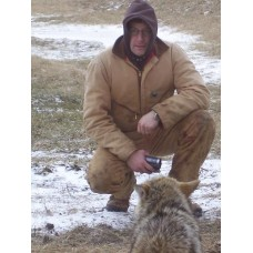 Combines & Coyotes, Wolfen' the Corn belt, coyote trapping video