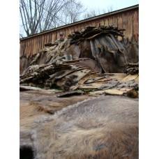 DAMAGE COMPLAINT, beaver food lure