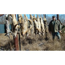 Eastern Flat Set that Produce, coyote trapping video