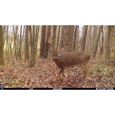 Undetected Deer Cover Scent/ Attractant