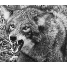Yote Dope, coyote lure 2 oz